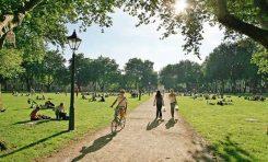 NASA: Ağaçlar Şehir Yaşamının Zorunlu Bir Parçası Olmalı