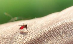 Sıtmadan Kanser Tedavisine Büyük Katkı