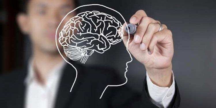 Üstün Başarılı İnsanların Beyin Yapıları Farklı