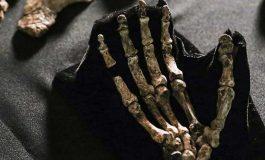 Yeni İnsan Türü Homo naledi 'nin El ve Ayak Yapısı