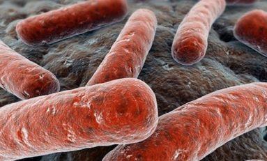 Escherichia Coli (E.coli) Salgınları