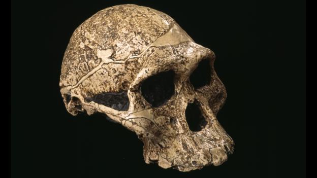 Australopithecus kafatası (Fotoğraf: Pascal Goetgheluck/SPL)