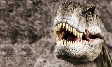 Dinozor Çeneleri Diyetlerini Nasıl Etkiliyor?