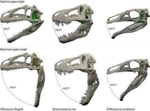 dinozor-cenesi-ve-beslenme-iliskisi-bilimfilicom