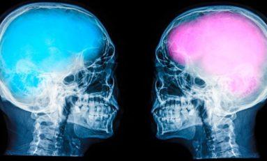 Erkek ve Kadın Hipokampusu Ne Kadar Farklı?