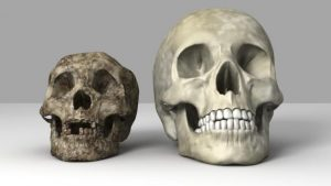 Solda hobbit kafatası ve sağda modern insan kafatası (Görsel: Equinox Graphics/SPL)