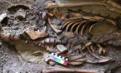 Genetik Hafiyelik Modern Avrupalıların Atalarını Ortaya Çıkarıyor