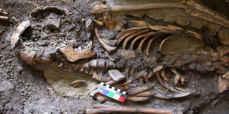 Genetik Hafiyelik Modern Avrupalı'ların Atalarını Ortaya Çıkarıyor