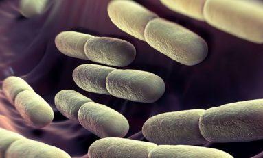 'İyi Bakteriler' Arasındaki Rekabet Bağırsak Sağlığını Koruyor
