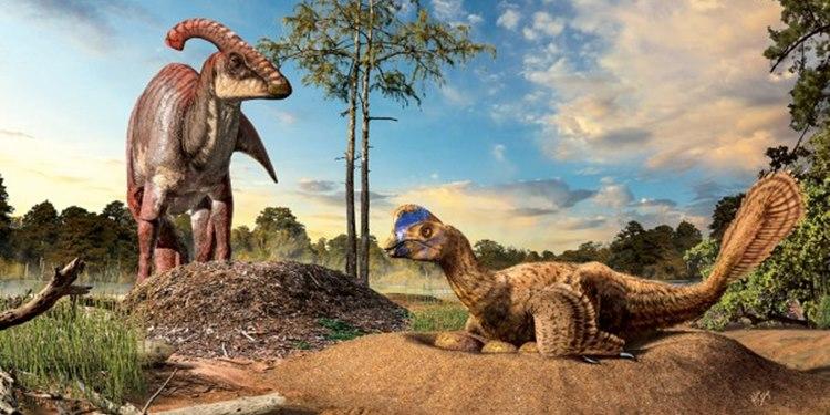 Kuş ve Dinozor Yuvaları Arasındaki Kayıp Bağlantı