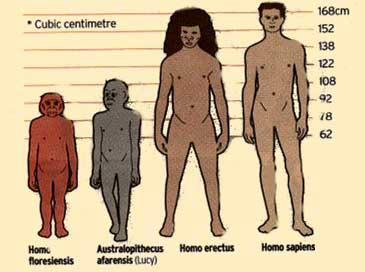 Soldan sağa: Homo Floresiensis, Lucy (Australopithecus Afarensis), Homo Erectus ve Homo Sapiens.