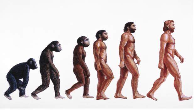 Primattan insana evrimin görselleştirilmiş hali (Credit: David Gifford/SPL)