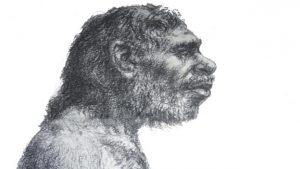Neanderthaller (Homo Neanderthalsis) daha önce düşünüldüğü kadar primitif değillerdi (Credit: Ray Roberts/Alamy)