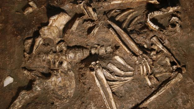 Neanderthal kemikleri(replica) (Credit: Javier Trueba/MSF/SPL)