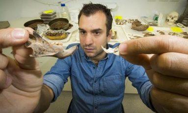 Yaşamış En Büyük Sıçan Fosilleri Keşfedildi