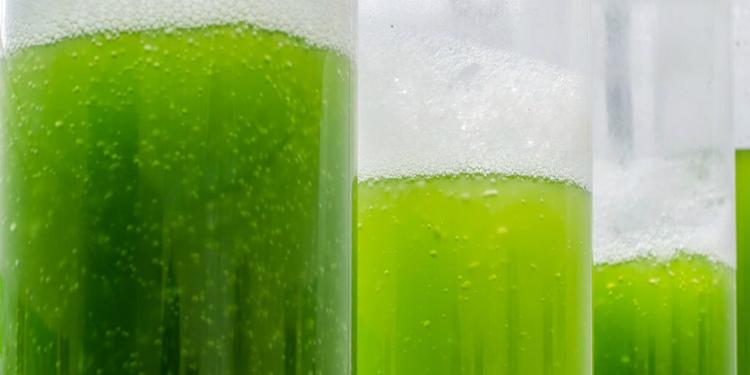 Algden Elektrik Elde Edebilen Yakıt Hücresi Geliştirildi