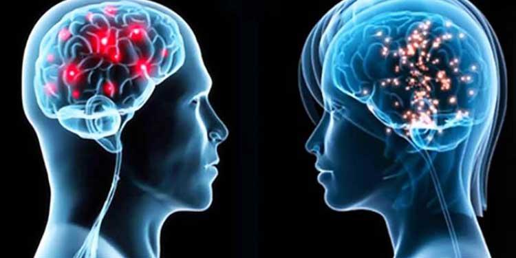 Beynimizin Bir Cinsiyeti Var mı?