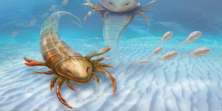 devasa-deniz-akrebi