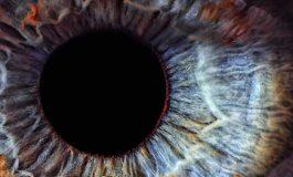 Göz Rengimizin Evrimi