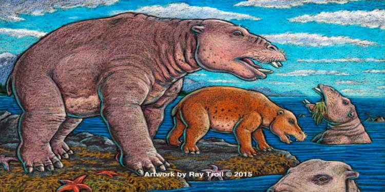 hipopotam-vakum-temizleyici