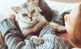 Toksoplazma Sadece Kedilerden mi Bulaşır?