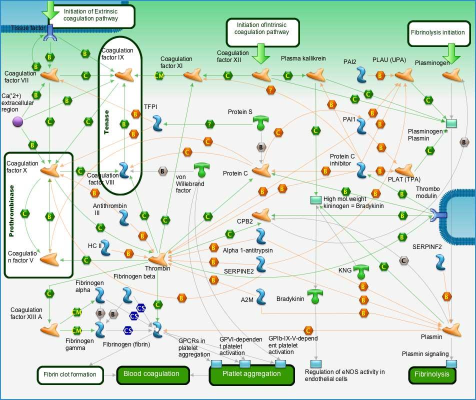 Anlaşılabilir şekliyle pıhtılaşma sistemi (Şekil kaynağı: BMC Bioinformatics, DOI: 10.1186/1471-2105-14-59)