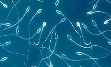 Sperm Sağa Dönmek İçin Boynunu Kıvırmak Zorunda
