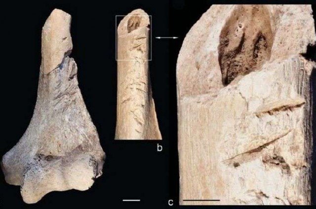 yarali-kemikler-neolitik-savasa-isaret-ediyor-bilimfilicom