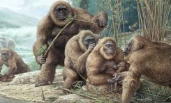 Dev Ape Gigantopithecus Neden Yok Oldu?