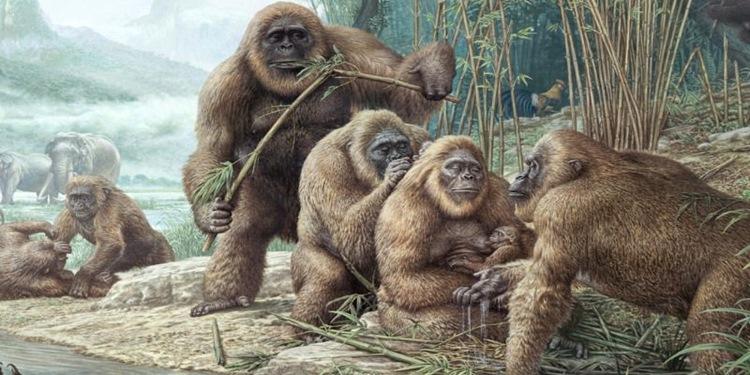 neandertal neden yok oldu