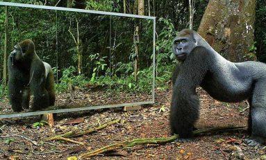 Hayvanlar Kendilerini Ayna Karşısında Tanıyabilirler mi?