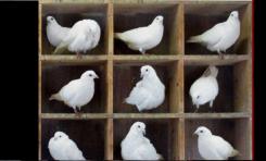 Kuantum Güvercin Yuvası İlkesi