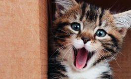 Üzgünüz, Bilim Kedi Sevmeyenlerin Yanında Değil