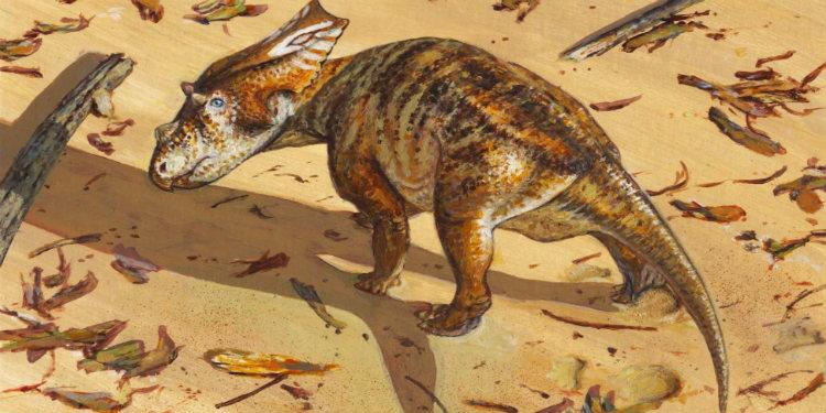 Yeni Cretaceous Chasmosaurus Fosili, Dinozor Evrimindeki Boşlukları Doldurabilir