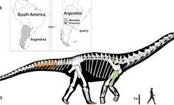 Yeni Dev Dinozor Fosili Keşifleri