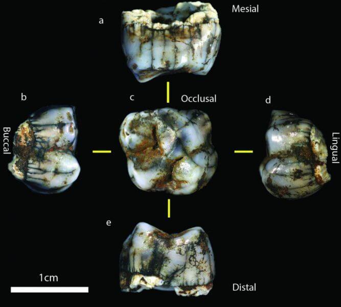 2-milyon-yillik-yeni-hominin-fosilleri-bilimfiliocm