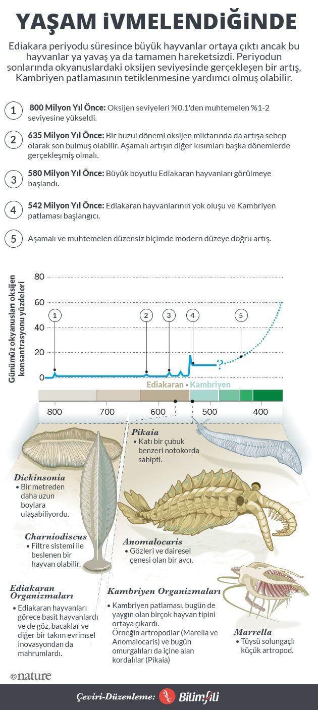 Kambriyen-Patlamasi-infografik-bilimfilicom