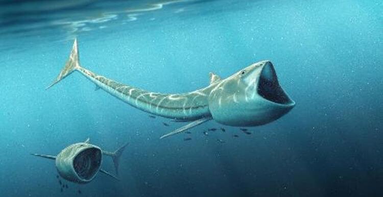 92 Milyon Yıllık 'Büyük Ağızlı' Balık Fosili Keşfedildi