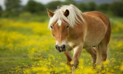 Atların Yüz İfadelerimizi Okuduğunu Biliyor Muydunuz?