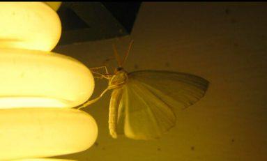 Hangi Lamba Tipi Böcekleri Daha Çok Cezbediyor