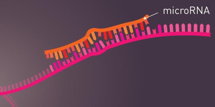 Kanser Biyoişaretlerini Tespit Edebilen Teknoloji