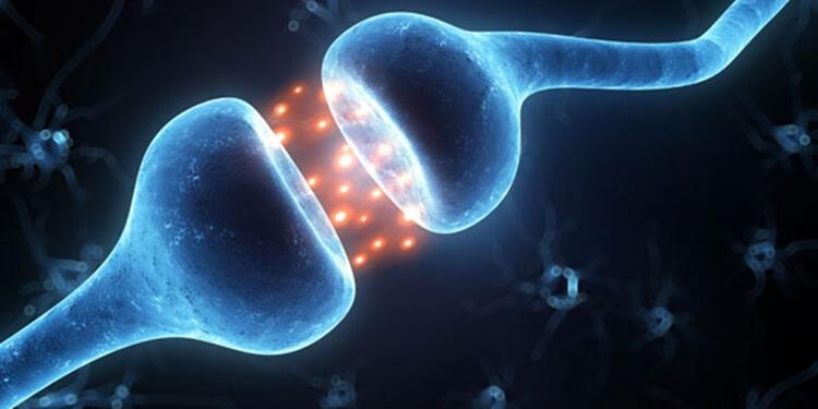 NMDA Reseptörlerinin Sinapslara Taşınmasının Önemi