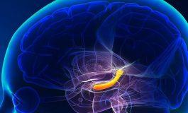 Senkronize Beyin Dalgaları Hafızaları Birleştiriyor