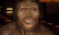 Australopithecus afarensis'e Ait Yeni Fosiller Bulundu