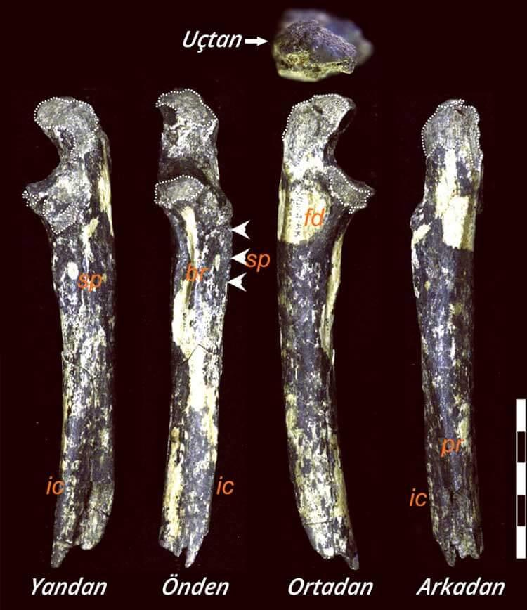 australopithecus-afarensise-ait-yeni-fosiller-bulundu-gorsel-bilimfilicom
