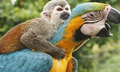 Bazı Kuşlar Apeler Kadar Akıllı Olabilir mi?