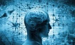 Beynimizi Özel Yapan Nedir?