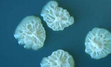 Uzayı Dünyadan Daha Rahat Bulan Bakteriye Rastlandı