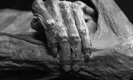 İlk Kez Bir Mumyadan Tam DNA Elde Edildi