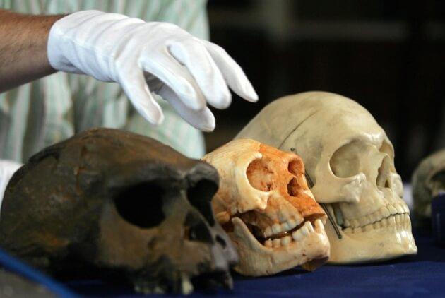 Ortada ayırt edilebilir oranda küçük boyutlarda olan Homo floresiensis kafatası görülmektedir. telif : JIM WATSON/AFP/